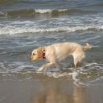 Emma beim Wassertreten in der Nordsee