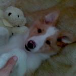 Süße kleine Ella