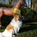 Wegweiser: Ein ungewöhnliches Trio weist den Weg zur Gütersloher Praxis für Tierphysiotherapie Im Brock 43: Schild, Pferdchen und Collierüde Leander.